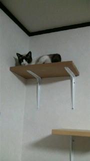 卒業猫?マリリンちゃん?